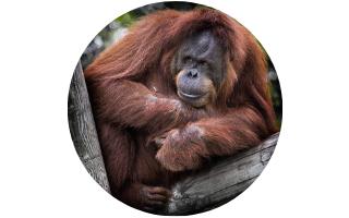 Auckland Zoo Orangutan Habitat